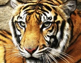 Animal Sanctuary Trust Indonesia