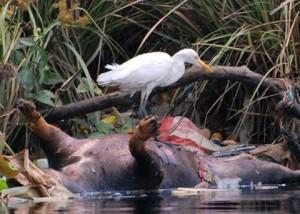 Muara Angke Fauna by Antony Sutton