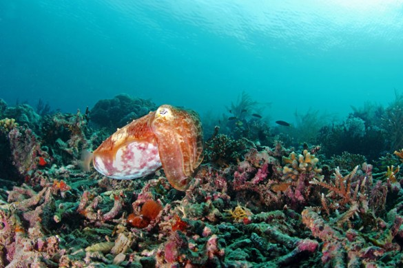 Diving in Derawan - East Kalimantan by Ria Qorina Lubis