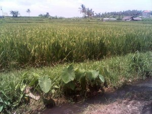 Celebrating Earth Day in Bali