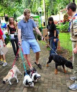 JAAN - Jakarta Animal Aid Network