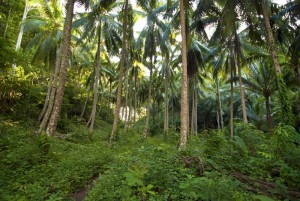 The jungle at the Togian Islands