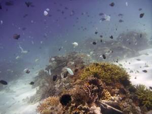 The Biorock - Bali