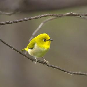 Bird of Mount Ijen