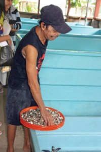 Pak Salim feeds penyu