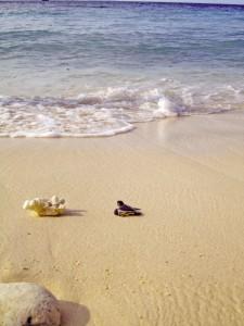 Durai Island