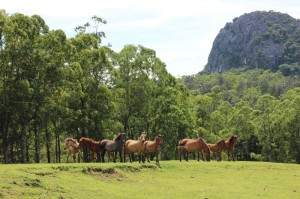 Horses Grazing with Fatu Nausus in the Background