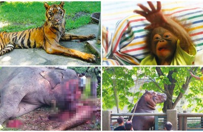 Surabaya Zoo Animals