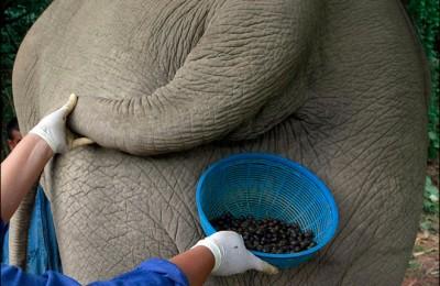 Elephant Poo Coffee