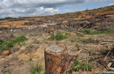 deforestation-2