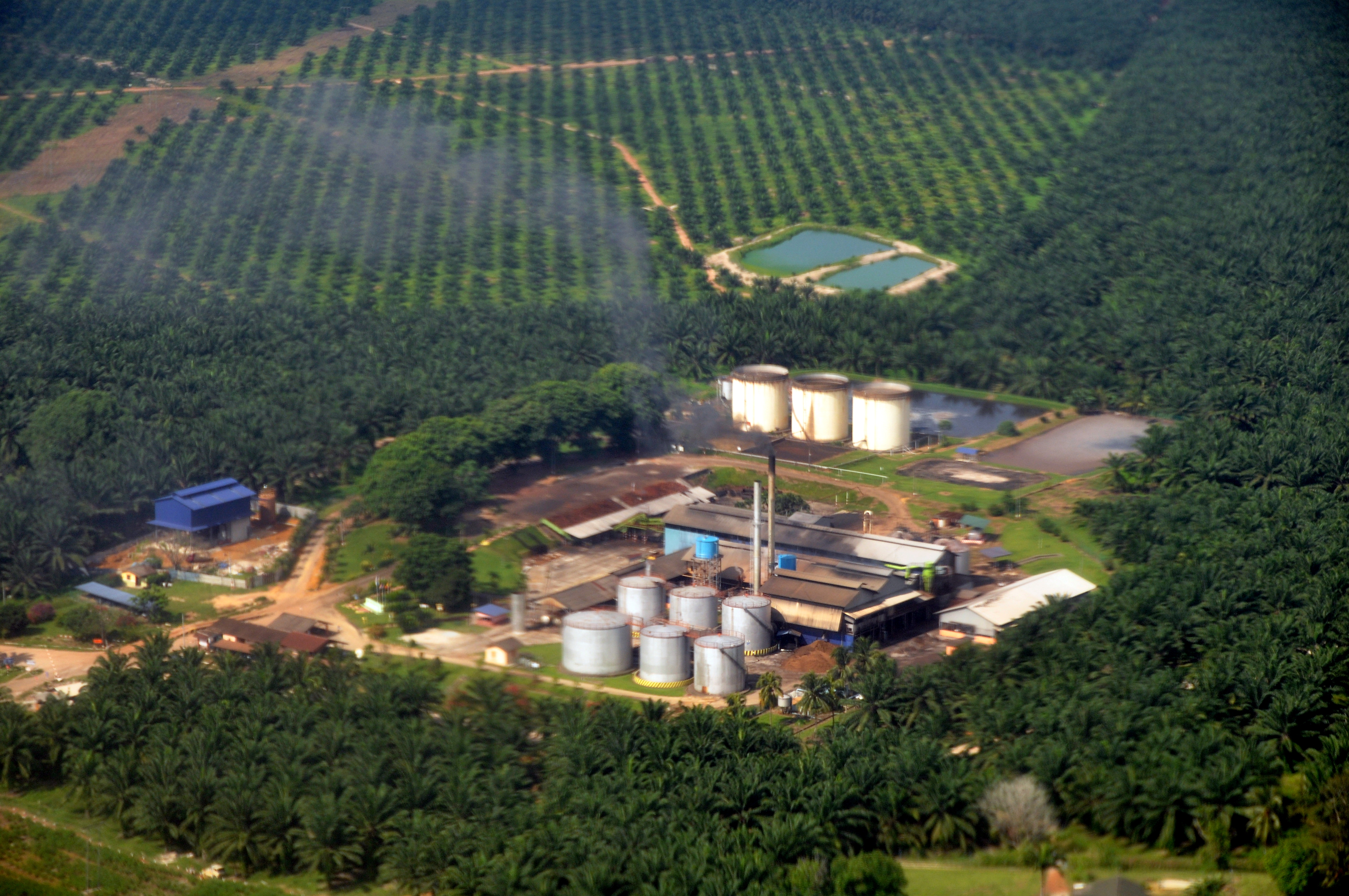 Home Design Companies In Singapore Indonesia Looks Toward Palm Oil Sustainability In