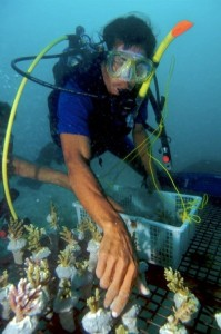 Coral conservation in Belitung