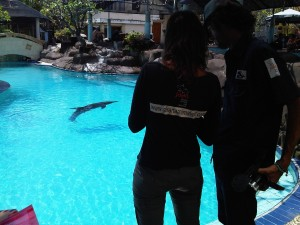 Jakarta Animal Aid Network (JAAN) Checking the Dolphins at Melka Hotel, Bali