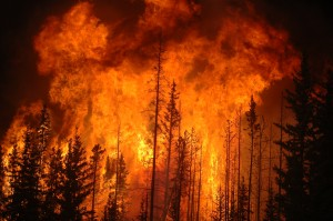Forest fires Wikimedia