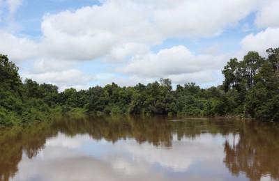 Pristine forests in Central Kalimantan. Photo by Angela Richardson