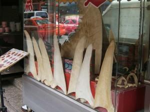 Shark fins for sale | Photo by Shankar S