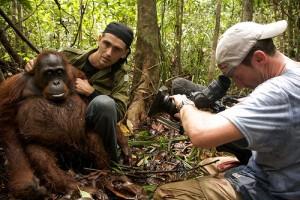 Chanee Kalaweit rescuing an orangutan