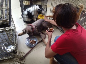 Rescued dogs at Garda Satwa Indonesia's shelter