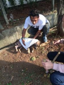 Garda Satwa Indonesia rescuing an abandoned dog