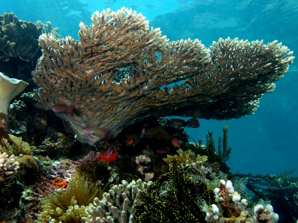 coral reefs are threatened due to benoa bay's project