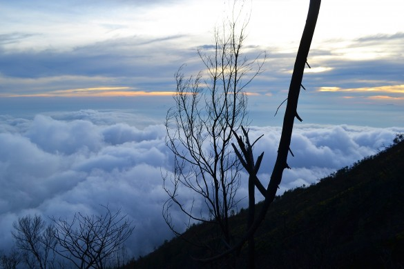 The View of Mount Lawu