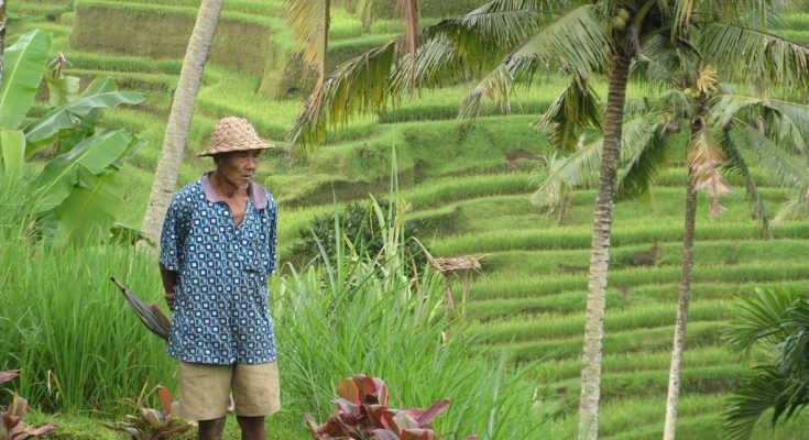 entrepreneurs cut out middlemen in indonesia s agricultural trade