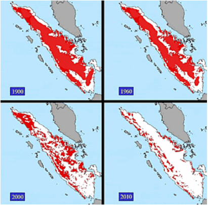 Forest Loss Sumatra 1900 - 2010 - Red indicates forest cover