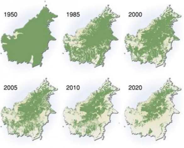 forest-loss-borneo-1950-2010