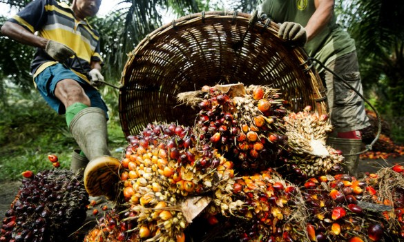 Palm oil Indonesia via WorldWilfLife