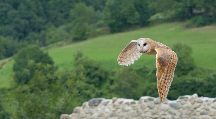 owl-agritourism-west-sumatra-1