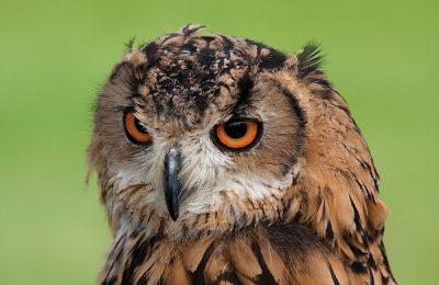 owl-agritourism-west-sumatra