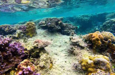 Karimunjawa Reef