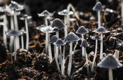 mushrooms-116973_1920