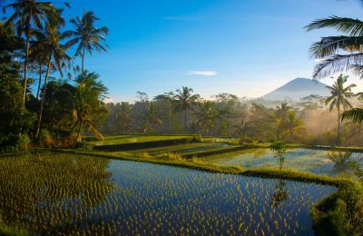 Sunrise over the rice fields of Bali. Another day to rejoice.