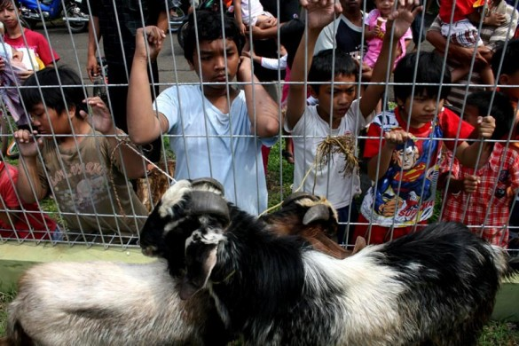 Young on-lookers observes the sacrificial procession. Islam only calls for the wealthy to donate cows, sheeps and lambs for Eidl Qurban. Eidl Qurban and Eidl Fitr are two most important dates on Islam's calendar.