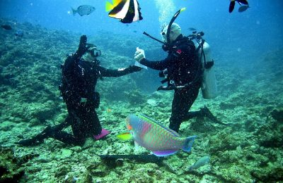Reef Sea Diving Scuba Underwater Ocean Divers