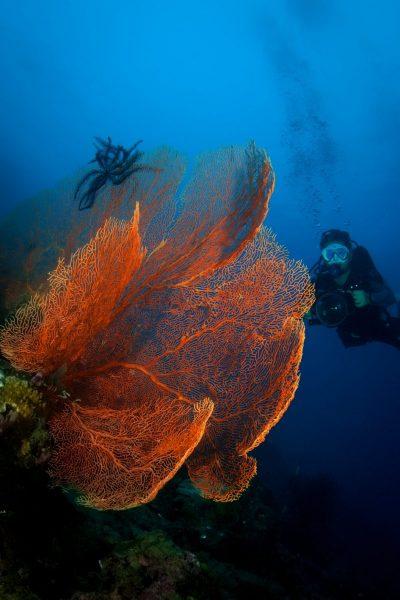 diving mandarin oriental